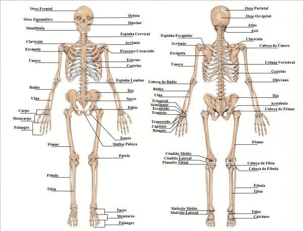 quantos ossos tem o corpo humano