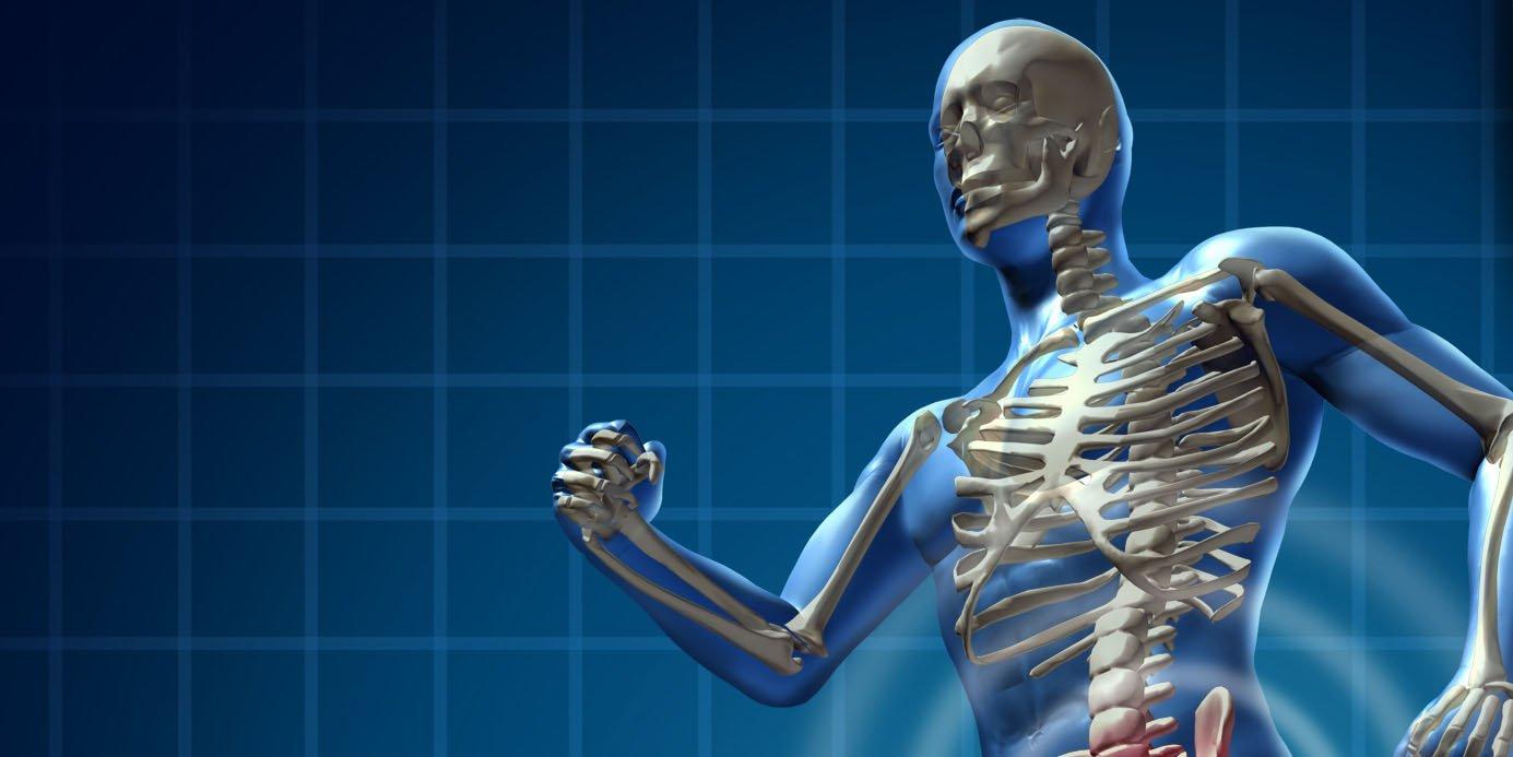Quantos ossos tem o corpo humano?