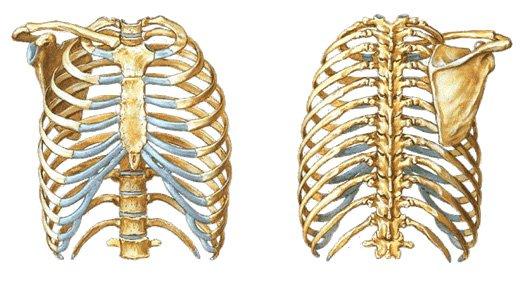 Tem dor no meio do tórax? Veja as causas e o tratamento adequado