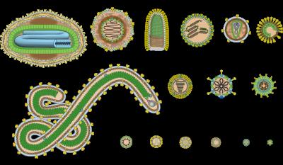 Reprodução dos Vírus nos seres vivos